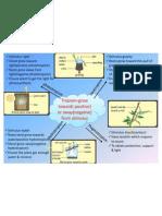 stimuli & responses in plants
