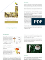 Boas práticas de colheita de cogumelos silvestres