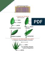 Botany_Terminology
