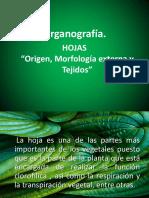 2 Origen, Morfología Externa y Tejidos de Hojas 2