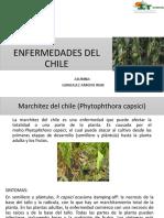 Enfermedades Del Chile