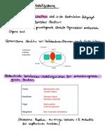 Entwicklungsbiologie vl 3