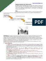 Urología, Conceptos Generales