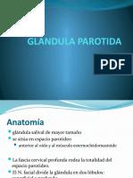 GLANDULA PAROTIDA
