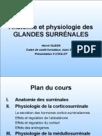 Anatomie Et Physiologie Des GLANDES SURRÉNALES