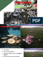 Reino Fungi 2020 Semana 10