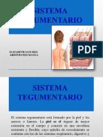 sistemategumentario-140204071726-phpapp02