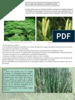 Documentos Plantas Vasculares