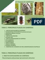 TEMA 2. PRINCIPALES PLAGAS EN CONÍFERAS (I)