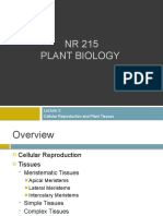 Lecture 3  - Cellular Reproduction and Plant Tissues