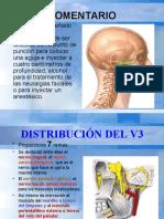 Anatomia Humana - Fosa Cigomática