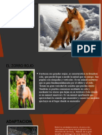 proceso Macroevolutivo del zorro rojo (2)