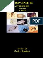 Tp1 Ectoparasites + Cestodes Adultes