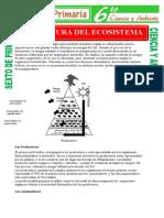 Estructura-del-Ecosistema-para-Sexto-de-Primaria
