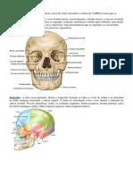 Atlas de Bolso de Anatomia Humana