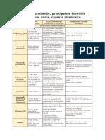 Tabelul vitaminelor, principalele functii in organism, surse, carente vitaminice