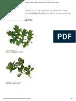 Identificar mi Bonsái, guía de identificación de los árboles - Bonsai Empire