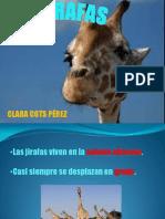 clara_cots