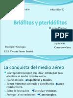 Briófitos y pteridófitos97