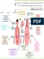 Mapa-mental-Sistema-endócrino