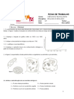 Ficha de trabalho 3- célula