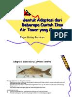 Bentuk Adaptasi Dari Beberapa Contoh Ikan