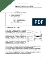 TEMA 18. Cara y sistema tegumentario