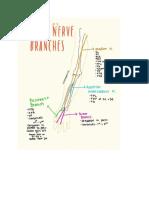 ocs nerve- referral