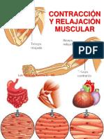 1. Contracción y Relajación Muscular