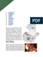 Etnia de guatemala 2021 actualizado