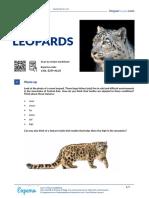 snow-leopards-american-english-teacher