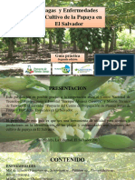 GUIA Plagas y Enfermedades en Papaya - 2018