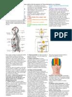 Bandas y columnas explicacion del doc de neurosintergetica en columnas
