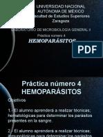 EXPO 4 HEMOPARÁSITOS