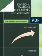 División , Cambios Celulares y Cromosomas