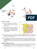 1-Resumen-Agua-y-biomoleculas
