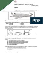 Ficha formativa final-trocas gasosas nas plantas-2020-21