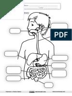 El Aparato Digestivo Ficha Recursosep