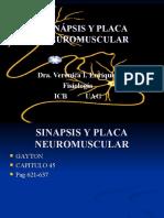 Sinapsis y Placa Neuromuscular i Com