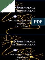 sinapsis-y-placa-neuromuscular-i-completa-1