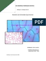 3-morgado-mateus-biologia-e-geologia-ano-i-relatorio-da-actividade-experimental-observacao-microscopica-de-celulas-professora-sonia-leandro-trabalho-elaborado-por-joao pqrt 1 em PDF
