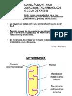 ciclo-del-acido-citrico1