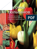 Forcing_Tulips_Russisch