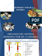 Reproductor Hembra Listo ;)