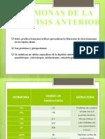 HORMONAS DE LA HIPOFISIS ANTERIOR Y POSTERIOR
