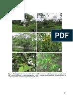 Plan de Manejo Ambiental Humedal Panamericano_Parte2