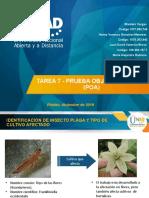 Final Entomologia