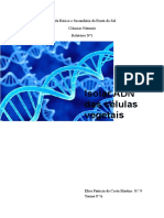 Relatório extração do ADN