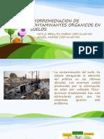 Fitorremediacion de Contaminantes Organicos en Suelos
