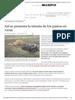 Así Se Presenta La Tetania de Los Pastos en Vacas _ CONtexto Ganadero _ Noticias Principales Sobre Ganadería y Agricultura en Colombia